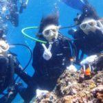 沖縄ダイビング☆2/3 青の洞窟体験ダイビング 13:00~ しおん・なすび