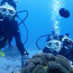 沖縄ダイビング☆2/2 サンゴ礁体験ダイビング 15時半~ しおん