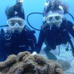 沖縄ダイビング☆2/5  珊瑚のお花畑体験ダイビング 10:30~ りさ
