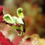 沖縄ダイビング☆ 2/26 ビーチFUN&珊瑚礁体験ダイビング 9時~ なすび
