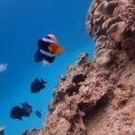 沖縄ダイビング☆3/22 珊瑚礁体験ダイビング 11時~ どら
