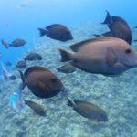 沖縄ダイビング☆4/9  サンゴ礁体験ダイビング 13:00~ ドラ