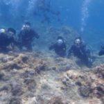 沖縄ダイビング☆ 5/25 青の洞窟体験ダイビング 10時~ なすび・しおん・ドラ