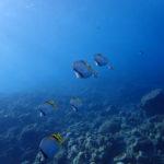 沖縄ダイビング☆6/29青の洞窟スノーケリング13:00~ なすび
