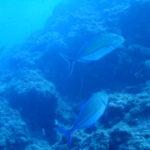 沖縄ダイビング☆6/1 FUNボートダイビング 瀬良垣 なすび