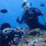 沖縄ダイビング☆6/14 珊瑚礁体験ダイビング 14時~ なすび
