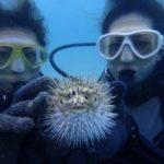 沖縄ダイビング☆9/20 珊瑚礁体験ダイビング 13:00~ なすび