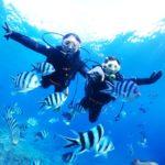 沖縄ダイビング☆1/24 珊瑚礁体験ダイビング 9:00~ どら