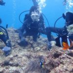 沖縄ダイビング☆2/26 青の洞窟体験ダイビング 13:00~ なすび・ローラ・シャリ