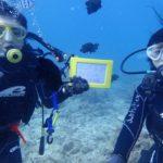 沖縄ダイビング☆3/24 珊瑚礁体験ダイビング 10:00~ やす・しおん