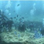 沖縄ダイビング☆6/24 青の洞窟体験ダイビング 10:30  ローラ・しおん・とも・シャリ・せいや