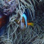 沖縄ダイビング☆6/23 青の洞窟体験ダイビング16:00~ なすび・ローラ・しゃり